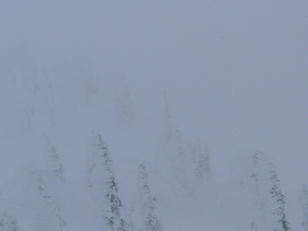 Big White: Trees in the Fog